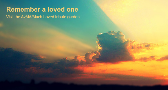 AvMA Much Loved tribute garden